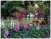 青年公園花卉欣賞、花展、恐龍展等:青年公園_0054.jpg