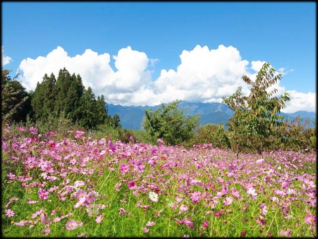 中部旅遊:福壽山農場_085.jpg