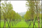 大溪老街‧公園、八德埤塘生態公園、大古山步道:大溪河濱公園_007.jpg