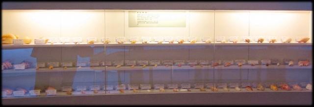 各種特展及參觀:貝殼博物館-1_006.jpg