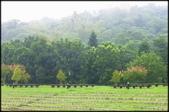大溪老街‧公園、八德埤塘生態公園、大古山步道:大溪河濱公園_016.jpg
