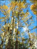 尖石鄉、秀巒村、青蛙石、薰衣草森林:秀巒楓樹林_89.jpg