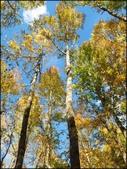 尖石鄉、秀巒村、青蛙石、薰衣草森林:秀巒楓樹林_140.jpg