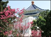 立法院、台北賓館、自由廣場、中正紀念堂:中正紀念堂櫻花-1_60.jpg