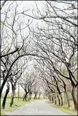 新竹風景區:新竹舊港里環島步道-3_009.jpg
