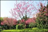 立法院、台北賓館、自由廣場、中正紀念堂:中正紀念堂櫻花-1_69.jpg