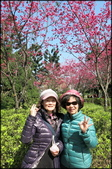 立法院、台北賓館、自由廣場、中正紀念堂:中正紀念堂櫻花-1_24.jpg