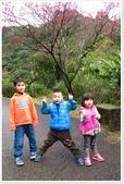 二格山、潭腰賞櫻、永安景觀步道、八卦茶園:二格山賞櫻_21.jpg