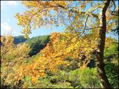 尖石鄉、秀巒村、青蛙石、薰衣草森林:秀巒楓樹林_160.jpg