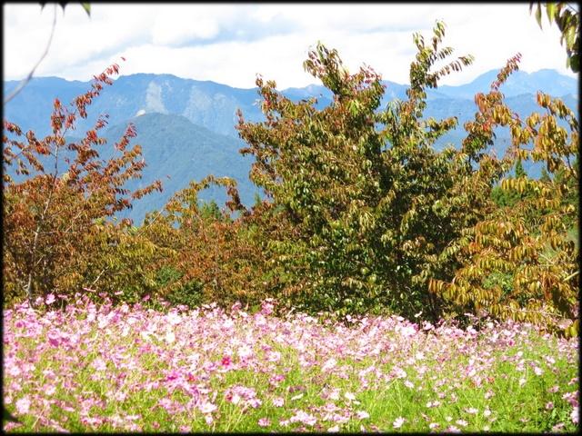 中部旅遊:福壽山農場_074.jpg