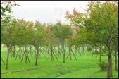 大溪老街‧公園、八德埤塘生態公園、大古山步道:大溪河濱公園_011.jpg