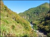 尖石鄉、秀巒村、青蛙石、薰衣草森林:秀巒楓樹林_16.jpg