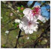 好友聚餐、歡唱、友人贈花、賞花:春遊中正紀念堂_14.jpg