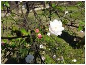 好友聚餐、歡唱、友人贈花、賞花:春遊中正紀念堂_16.jpg