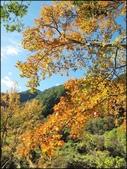 尖石鄉、秀巒村、青蛙石、薰衣草森林:秀巒楓樹林_159.jpg