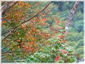 尖石鄉、秀巒村、青蛙石、薰衣草森林:陽具公園_001.jpg