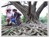 土城桐花公園、山中湖、文筆山、太極嶺:土城桐花公園_012.JPG