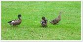 大溪老街‧公園、八德埤塘生態公園、大古山步道:八德埤塘生態公園-1_004.jpg
