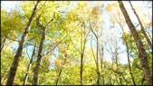 尖石鄉、秀巒村、青蛙石、薰衣草森林:秀巒楓樹林-1_003.jpg