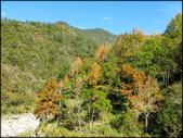 尖石鄉、秀巒村、青蛙石、薰衣草森林:秀巒楓樹林_174.jpg