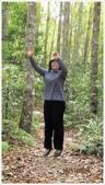 尖石鄉、秀巒村、青蛙石、薰衣草森林:秀巒村楓樹林-1_12.jpg