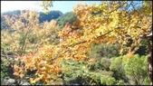 尖石鄉、秀巒村、青蛙石、薰衣草森林:秀巒楓樹林-1_005.jpg