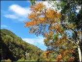 尖石鄉、秀巒村、青蛙石、薰衣草森林:秀巒楓樹林_61.jpg