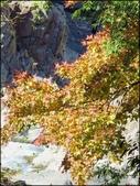 尖石鄉、秀巒村、青蛙石、薰衣草森林:秀巒楓樹林_72.jpg