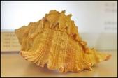 各種特展及參觀:貝殼博物館_015.jpg
