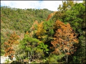 尖石鄉、秀巒村、青蛙石、薰衣草森林:秀巒楓樹林_52.JPG