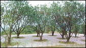 基隆旅遊、情人湖、海興森林步道、七堵車站、紅淡山:大牛稠登山步道-1_018.jpg