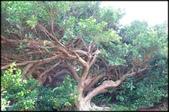 富貴角燈塔步道、麟山鼻步道、貝殼廟:富貴角公園_021.jpg