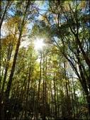 尖石鄉、秀巒村、青蛙石、薰衣草森林:秀巒楓樹林_121.jpg