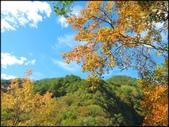 尖石鄉、秀巒村、青蛙石、薰衣草森林:秀巒楓樹林_64.jpg