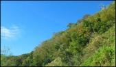 尖石鄉、秀巒村、青蛙石、薰衣草森林:秀巒楓樹林_02.jpg