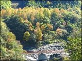 尖石鄉、秀巒村、青蛙石、薰衣草森林:秀巒楓樹林_03.jpg