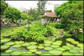 大台北地區:雙溪公園大王蓮_052.jpg