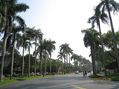 台灣大學杜鵑花、醉月湖:台灣大學杜鵑花盛開 012.jpg