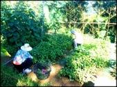 三峽風景區:紫微聖母環山步道探路_048.jpg