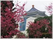 立法院、台北賓館、自由廣場、中正紀念堂:中正紀念堂賞櫻_040.JPG