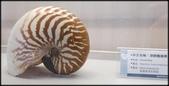 各種特展及參觀:貝殼博物館_007.jpg