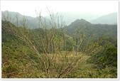 二格山、潭腰賞櫻、永安景觀步道、八卦茶園:二格山賞櫻_09.jpg