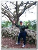 土城桐花公園、山中湖、文筆山、太極嶺:土城桐花公園_017.jpg