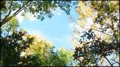 尖石鄉、秀巒村、青蛙石、薰衣草森林:秀巒楓樹林-1_001.jpg