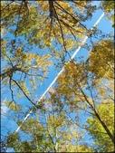 尖石鄉、秀巒村、青蛙石、薰衣草森林:秀巒楓樹林_128.jpg