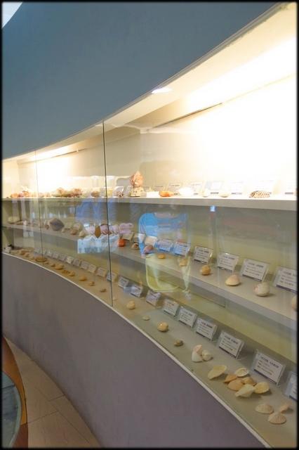 各種特展及參觀:貝殼博物館_030.jpg