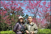立法院、台北賓館、自由廣場、中正紀念堂:中正紀念堂櫻花-1_26.jpg