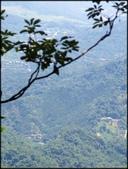三峽風景區:紫微天后宮步道探路_053.jpg