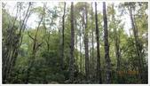 尖石鄉、秀巒村、青蛙石、薰衣草森林:秀巒村楓樹林-1_19.jpg