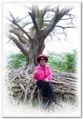 土城桐花公園、山中湖、文筆山、太極嶺:土城桐花公園_018.jpg
